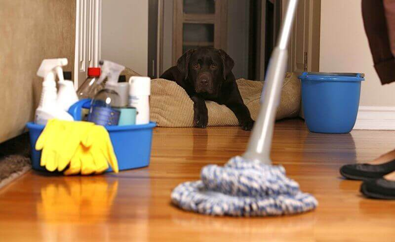 Do You Need The Service of Apartment cleaning Washington?